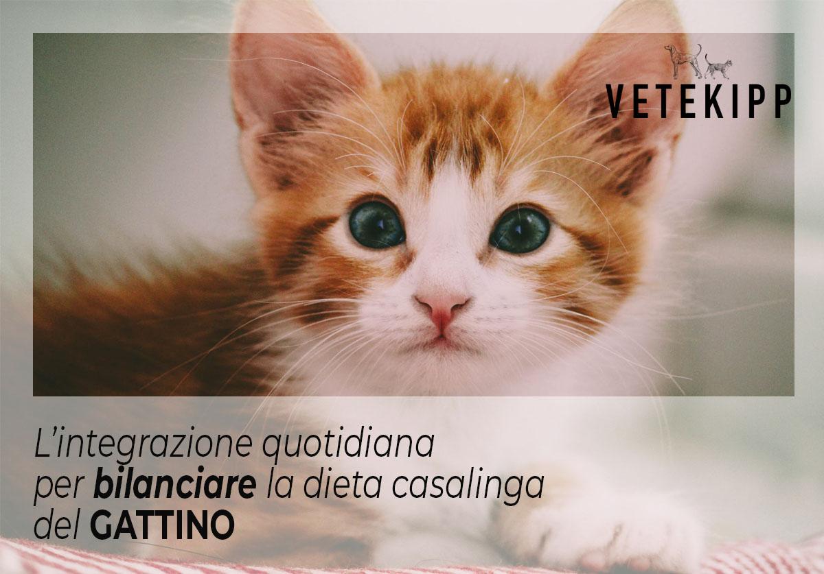 dieta per gattino