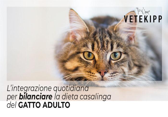 dieta casalinga per gatto adulto