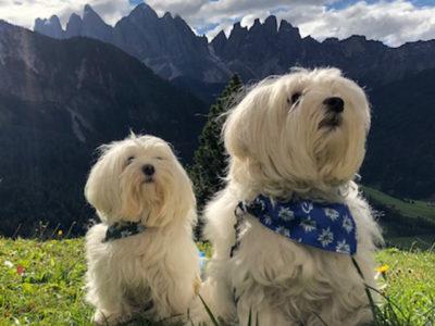 Cani sui monti