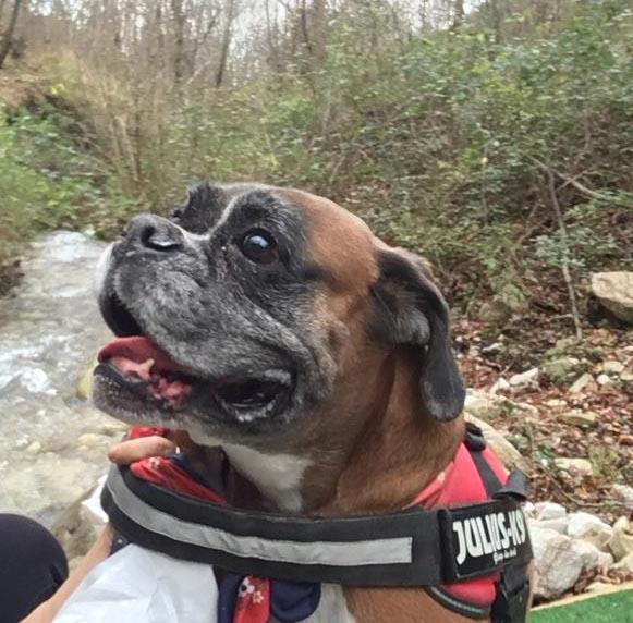 Cane sul bosco
